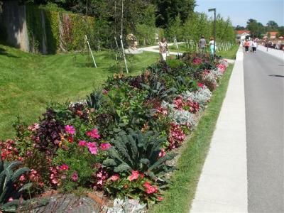 Kohlpflanzen im Blumenbeet
